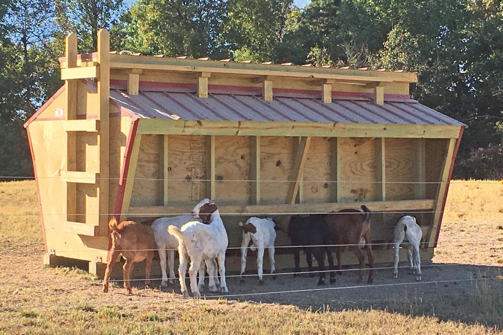 Sheep & Goat Feeders - A1 Cattle Feeders